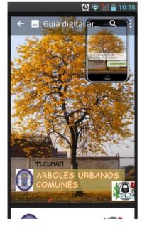 ARBOLES_URBANOS