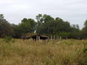 Abandoned puesto with succesional vegetation