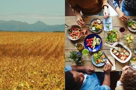Sudamérica alimenta al mundo (a expensas del medio ambiente)